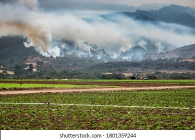 """The California """"River Fire"""" in rages through the hills of Salinas, in Monterey County, with agricultural fields seen in the foreground."""