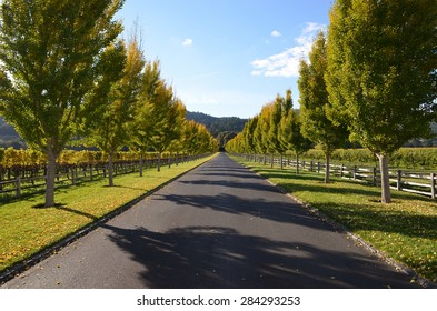 California road between trees in Napa Valley during the fall.
