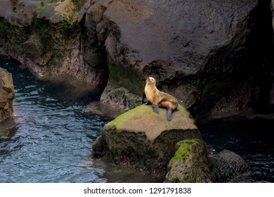 California Sea Lion sitting on rocks in morning light - La Jolla, San Diego, California