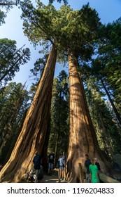 California, the Sequoia Park
