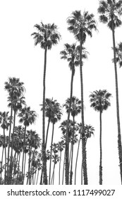 California State palm tree. Summer vacation, tropical beach conc