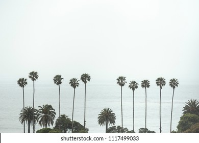 California State palm trees. Summer vacation, tropical beach con