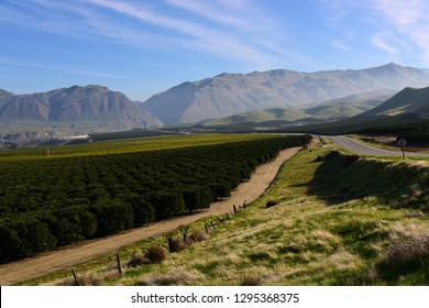 California State Route 178 leads from the Central valley through orange groves and vineyards into the canyon of the Kern River, where dangerous curves await in the mountains.