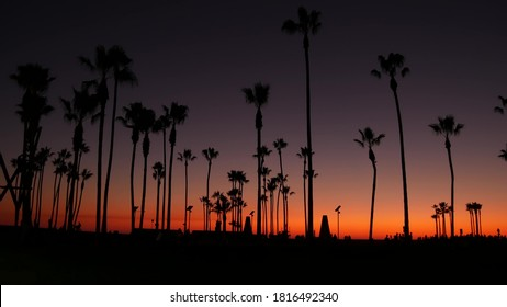 California summertime dusk twilight aesthetic, purple dramatic sunset. Palm tree iconic silhouettes on famous Venice beach, Santa Monica pacific ocean resort, Los Angeles CA USA. Atmospheric sundown.