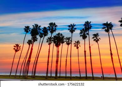 California sunset Palm tree rows in Santa Barbara US [photo illustration]