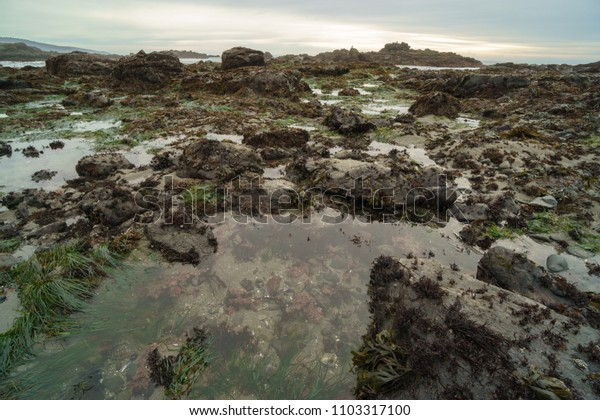 California tide pools low tide