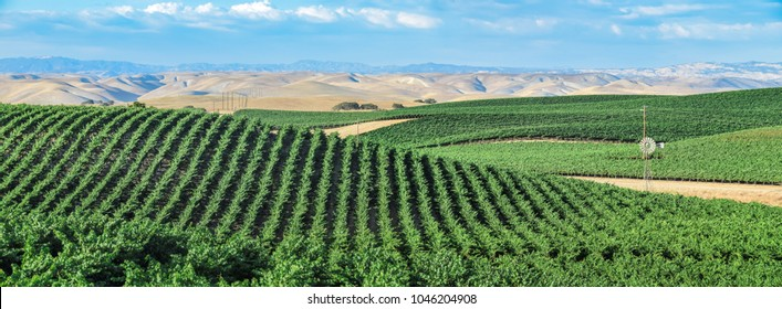 California Vineyards: Rolling hills, valleys, rows of grapevines and wineries are common in the wine country fields of rural Northern and Central California such as Napa, Sonoma and Monterey County.
