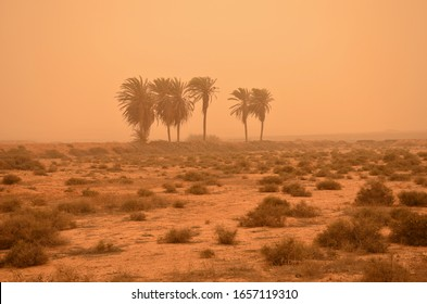 Calima, sand storm in Fuerteventura, Canary Islands