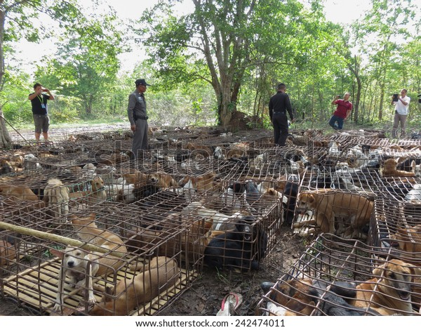 A CALL for Animal Rights Thailand  Later on (10 Oct 2014), the National Legislative Assembly (NLA.) Bangkok, Thailand is considering a bill to prevent cruelty and animal welfare.