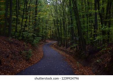 Call of the woods, Buchlov, Czech Republic
