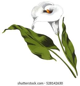 Calla flower painted in tempera