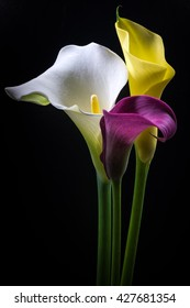 Calla, flowers, close-up, macro.
