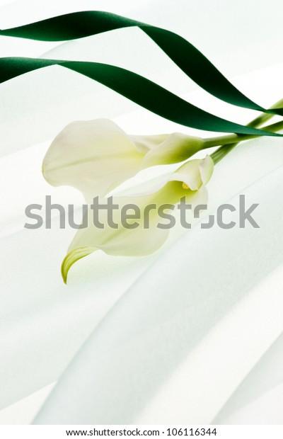 calla and green ribbon on soft chiffon