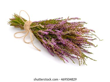 Calluna vulgaris (known as common heather, ling, or simply heather) isolated.