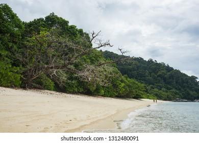Calm beach and rain forest on a cloudy day
