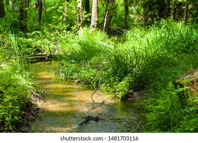 Calm brook in middle of forest