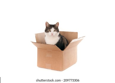 Calm cat in a removal box, isolated on white