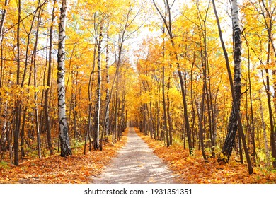 Calm fall season. Beautiful landscape with road in autumn forest. Maples and birch trees with green, yellow and orange leaves and footpath in the woodland in sunny day