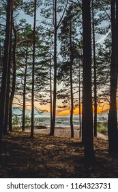 Calm forest by the sea, pine forest trails, sunset time
