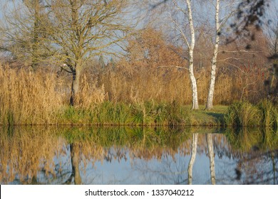 Calm lake surface with trees and plants