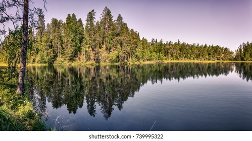 Calm lake view and a beautiful trees in Lapland.