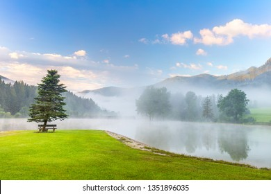 Calm morning on the mountains lake landscape with tree and bench, fog, green lawn, Alps, Europe