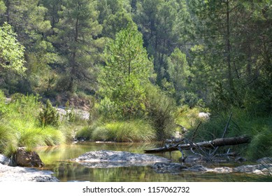 Calm nature scene with a mountain river
