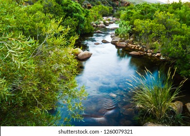 Calm Oasis, Small Babbling Brook In The Cederberg Wilderness, South Africa. A Stream or Clear Water and Green Foliage
