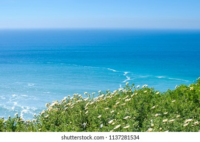 Calm ocean landscape on a sunny day. Portugal