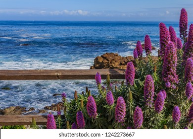 Calm Pacific Ocean with purple flowers and a rustic fence in the foreground