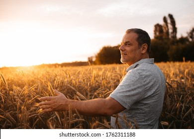 Calm peaceful adult man stand alone in middle of ripe golden wheat field. Guy reaching hands to wheatfield. Sunrise and sunset day period