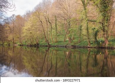 A calm reflection on the Cammo Estate and River Almond walk at Cramond Brig in Edinburgh, Scotland.