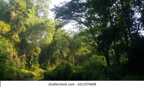 calm river between green bushes and bamboo trees