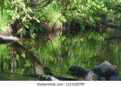 calm river fresh creek stream forest water reflections nature stone