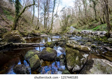 Calm river with rocks and fallen trees cover in green moss and algea in Claddagh Glen, County Fermanagh