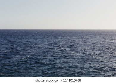 Calm sea with seagull and clear sky