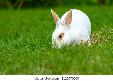 Calm and sweet little white rabbit sitting on green grass, cute bunny.