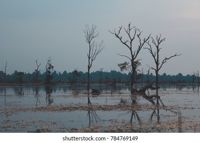 the calm wetlands of neak pean