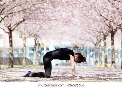 calm young woman practicing yoga cat pose in park among blossoming trees. girl standing in marjaryasana position outdoors in orchard park. wellbeing concept with cherry blossom on background.