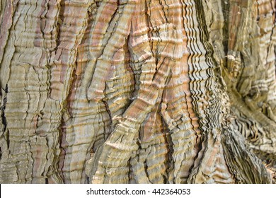 Calocedrus Decurrens Aureovariegata Natural Theme Background Stock