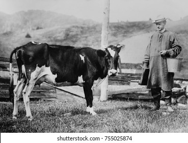 Calvin Coolidge wearing a smock and leather boots, approaches a dairy cow. Future President carried a pail and milking stool on his father's farm in Plymouth, Vermont. Ca. 1920-23.