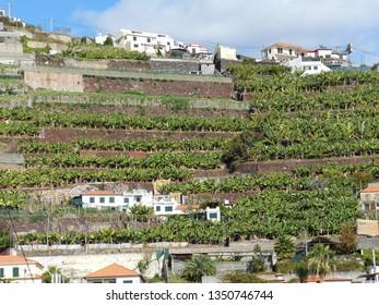 Camara de Lobos, Portugal / Portugal - January 2019: Buildings of Camara de Lobos situated on a cliff