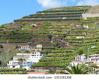 Camara de Lobos, Portugal / Portugal - January 2019: Buildings on a cliff in Camara de Lobos