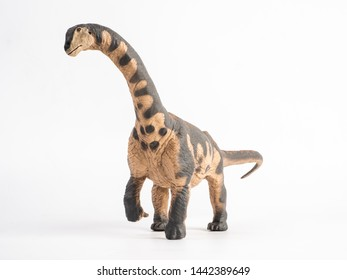 Camarasaurus Dinosaur on white background