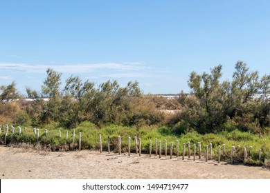 Camargue flora, vegetation scenery around the Regional Nature Park of the Camargue, swampy Ramsar wetlands and marshland vegetation and sand dunes in Southern France