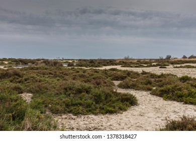 Camargue, France - April 20, 2019: Arid steppe with halofile plants and bushes.
