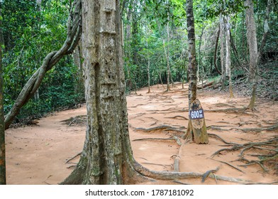 Cambodia: Kbal Spean; pathway to the carvings through the jungle