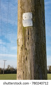 Cambridge, Cambridgeshire, UK - Circa December 2017: Close-up view of an electrical utility wooden pole showing an inspection stamp on the wood. A leaning cable pylon can be seen in the background.