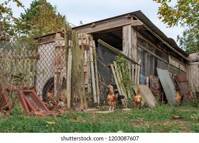 Cambridge, Cambridgeshire, UK - Circa October 2018: Make-shift, timber built large chicken house seen constructed in an allotment. The mid ground shows young free-range hens standing outside the house