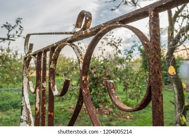 Cambridge, Cambridgeshire, UK - Circa October 2018: Close-up, shallow focus of a rusty garden, ornamental gate seen opened and leading the way to an apple and pear orchard in a rural location.